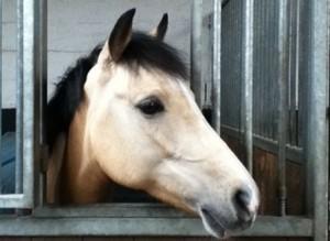 foto-manege-pony